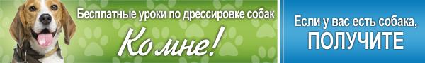Сайт о собаках