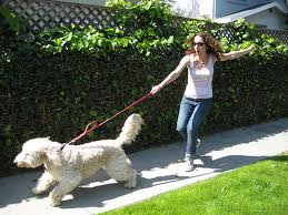Болят руки от того, что собака тянет поводок?