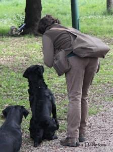 Команда барьер. Как научить собаку команде барьер