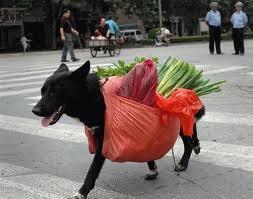 Как отучить собаку грызть вещи (обувь, стены, ваши любимые тапки), Ко Мне - дрессировка собаки дома