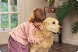 Что делать если в семье появился маленький ребенок, а в доме есть взрослая собака