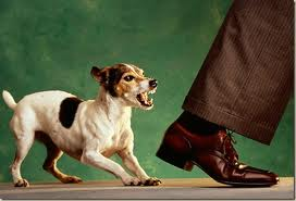 Собака кусает кулаки