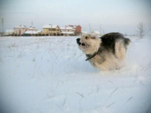 10 правил как правильно фотографировать собак
