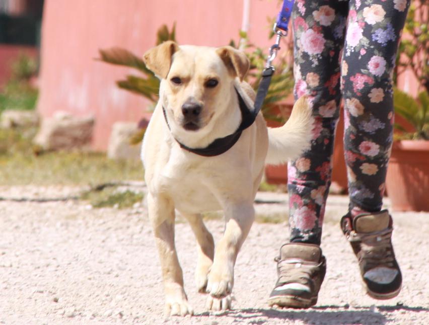 Дрессировка собаки дома