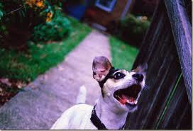 Как отучить собаку лаять, когда она остается одна
