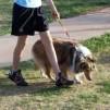 Как отучить собаку подбирать с земли «добычу»?