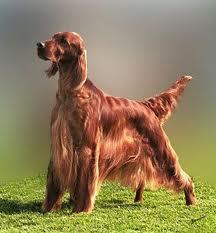 Собака для всей семьи