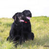 Как заставить вторую собаку слушаться во время прогулки? Собака тянет поводок, невозможно пройти по улице