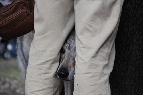 Выставки собак. Основные страхи