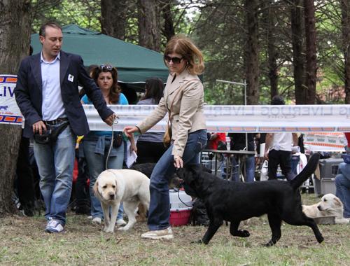 Хендлинг – один из способов любить собаку и зарабатывать на этом