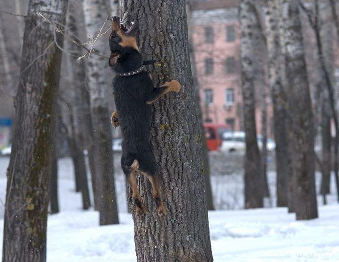 ягд на дереве