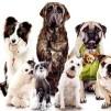 интернет-магазинах для собак2