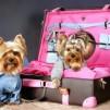 магазин для собак