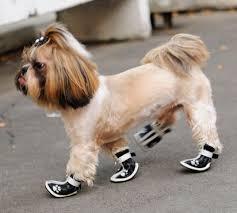 сапожки для собак2