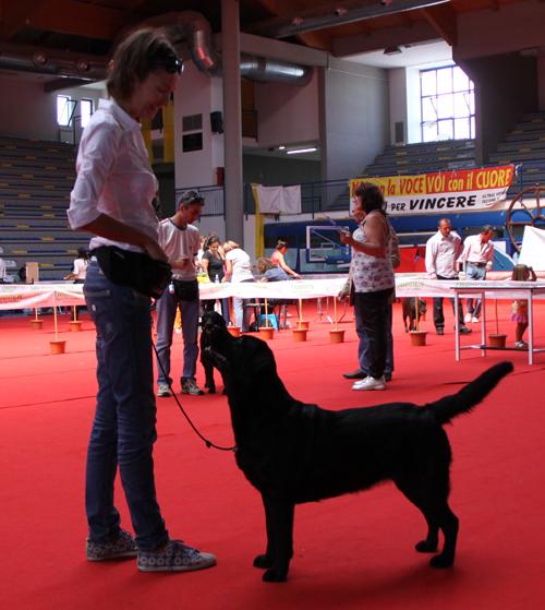 Зачем нужны выставки собак