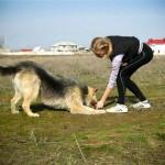 Во что играть с собакой на прогулке