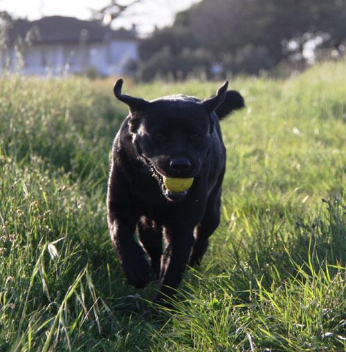 Картинки по запросу прогулки с собакой лес